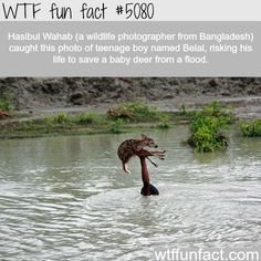Teenage boy risks his life to save a baby deer from flood - WTF fun facts | See more DIY projects/lifehacks here gwyl.io/