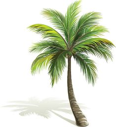 Palm tree with shadow isolated on white. Palm Tree Drawing, Palm Tree Art, Palm Tree Vector, Palm Trees, Free Vector Art, Free Vector Images, Coconut Palm Tree, Paint Vector, Christmas Tree Design