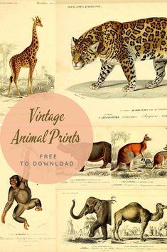 Vintage Images, Vintage Posters, Vintage Art, Vintage Ephemera, Wild Cat Species, Picture Boxes, Indian Elephant, Giraffe Print, African Animals