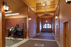 Not a bad life for a horse! Riverlands | GH2 Gralla Equine Architects Photo credit to: Ivan Hunter Photography