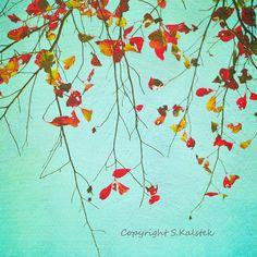 Fall Leaves Photograph Nature Soft Dreamy Tree Wall Art Pale Aqua Red Orange Yellow Wall Art 8x8
