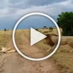 Crater National Park, Serengeti National Park, National Parks, Baby Animals, Funny Animals, Tanzania Safari, Arusha, Wildlife Safari, Garden Landscaping