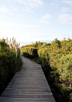 Sullivan's Island boardwalk #sullivans #beach #charleston