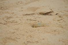 Crab Wildlife, Photos, Pictures