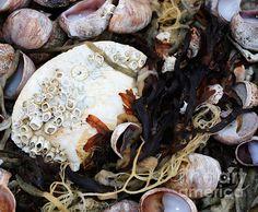 From the Ocean - photograph by Andrea Anderegg.  #andreaanderegg #stilllife