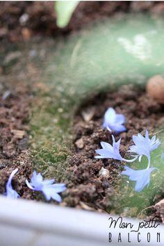CALENDRIER 2017 POUR JARDINER AVEC LA LUNE EN JUIN - Mon Petit Balcon Zucchini, Edible Flowers, Plant, Calendar For 2017, Blueberry, June