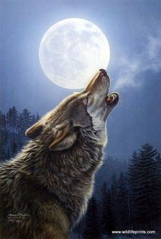 In this beautiful Jame Meger print a lone wolf howls into the full moonlit sky on a cold winter night. Wolf Spirit, Spirit Animal, Beautiful Wolves, Animals Beautiful, Wolf Parade, Tier Wolf, Animal Meanings, Oak Tree Tattoo, Wolf Artwork