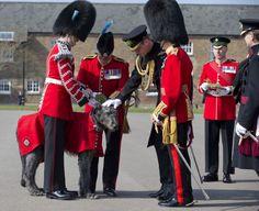 Wills Visits the Irish Guards
