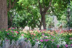 Particolare floreale all'interno dei Giardini Pubblici di Viale San Vincenzo Flamingo, City, Plants, Image, Flamingo Bird, Flamingos, Cities, Plant, Planets