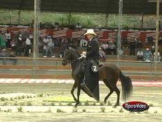 Gran Campeonato de Caballos Paso Fino Colombiano - Sogamoso 2013 - YouTube