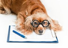 Are You A Crazy Dog Person? Take Our Quiz to Find Out! #Dogs