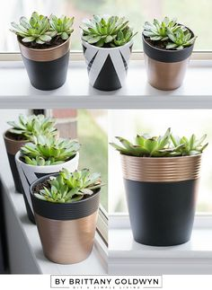 $2 yard sale succulents + free pots + a little paint = a lovely window garden! See how I did it.