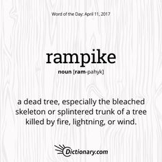 Rampike definition, a dead tree, especially the bleached skeleton or splintered trunk of a tree killed by fire, lightning, or wind. Unusual Words, Weird Words, Big Words, Words To Use, Unique Words, More Words, Great Words, Beautiful Words, Foreign Words