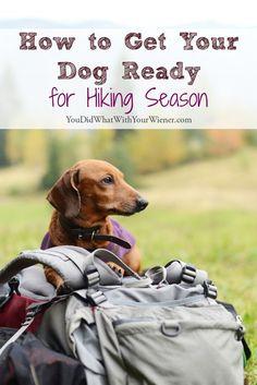 Useful Dog Obedience Training Tips – Dog Training Training Your Puppy, Dog Training Tips, Hiking Training, Marathon Training, Easiest Dogs To Train, Hiking Dogs, Hiking Gear, Dog Travel, Travel Tips