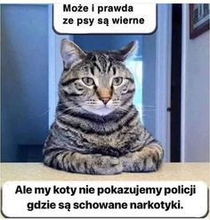 The Funny Relationship Between Cats And Fishes Memes) - World's largest collection of cat memes and other animals Funny Animal Memes, Cute Funny Animals, Funny Animal Pictures, Funny Cats, Funny Quotes, Funny Memes, Funniest Animals, Dog Pictures, Memes Humor