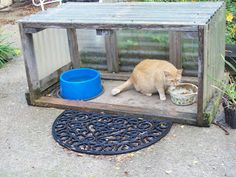 Feral cat feeding station                                                                                                                                                     More
