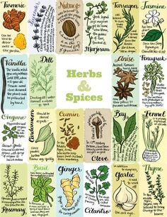 Herbs | Edible Madison by Bambi Edlund  Care of Edible Communities  http://ediblemadison.com/articles/view/herbs#