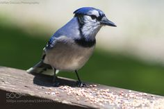 You looking at me? by aldeluca1 #animals #animal #pet #pets #animales #animallovers #photooftheday #amazing #picoftheday
