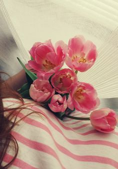 Pink. Tulips. Flowers. Photo