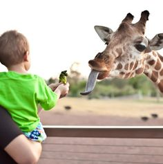 America's Most-Visited Zoos - Articles | Travel + Leisure