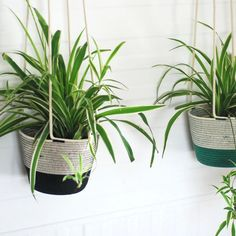 Hanging Planter Liquorice (Set of - Lucille Spehr Hanging Planters, Planter Pots, All Gifts, Cotton Rope, Fabric Scraps, Potted Plants, In The Heights, Greenery, Shapes