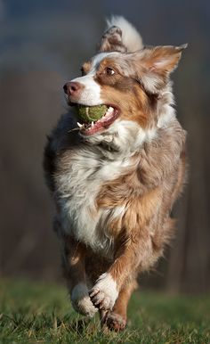 Happy dog in a game.