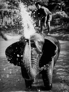 The Grand Tour of Asia: Thailand | Four Seasons Tented Camp Golden Triangle in Chiang Rai #elephants