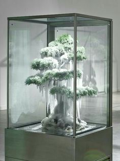 Bonsai in refrigerated case of snow