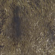Nani Iro Wild - Elegant Wind color C Japanese double gauze cotton fabric animal hair brown