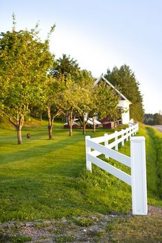 Rapturous Wooden fence with wire,Modern fence gate hardware and Garden fence panels Front Yard Fence, Farm Fence, Diy Fence, Fence Landscaping, Backyard Fences, Fence Gate, Garden Fencing, Fence Ideas, Pool Fence