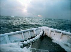 Fish-Work Bering Sea by Corey Arnold.