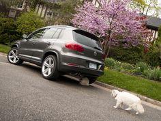 Diabolical cat meeting in progress under the stylishly understated Volkswagen Tiguan. #cars #Volkswagen