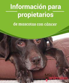 900 Ideas De Mascotas Pets En 2021 Mascotas Perros Animales Y Mascotas