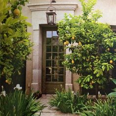 """Lemon trees, irises and agave enliven the courtyard-inspired front entrance."" Tuscan Style Magazine"