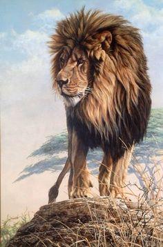 Original Paintings of Lions