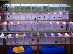 beta zone Aquarium Shop, Aquarium Stand, Aquarium Ideas, Saltwater Aquarium, Freshwater Aquarium, Aquarium Fish, Betta Fish Tank, Beta Fish, Aquarium Systems