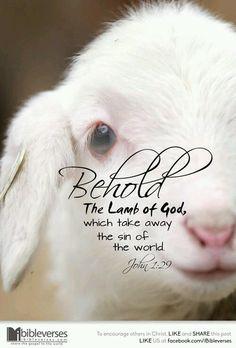 Jesus is our saviour.
