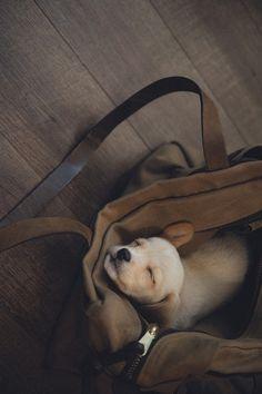 take me with you…...
