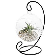 Charming Clear Glass Hanging Planter Terrarium Globe