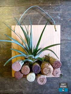 Maybe use corks in bottom of vase? #tillandsia and #corks #airplants: