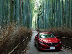 ゴル兄のマツダ アテンザに関するフォトギャラリー「Sagano Bamboo Grove」です。自動車情報は日本最大級の自動車SNS「みんカラ」へ!
