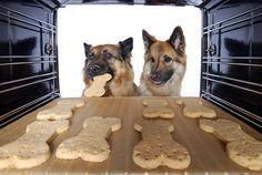 """Schon mal darauf geachtet, was in kommerziellen Leckerlis so alles drin ist? Wer seinen Hund barft, der sollte hier nicht wieder in alte Gewohnheiten verfallen, sondern konsequent bleiben. Denn herkömmliche """"Süßigkeiten"""" für den Hund sind wortwörtlich solche: oft sind vor allem Kohlenhydrate und Zucker enthalten, Fleisch haben diese Produkte oft nur im Vorbeifahren gesehen. Dabei"""
