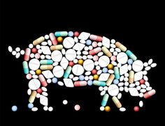 How We Can Cut Overuse of Antibiotics in our Food | Food Secure Canada