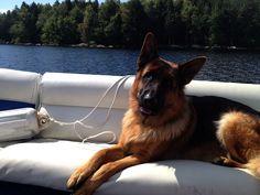 A German Shepherd in a boat