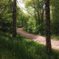 Ein Spaziergang am Morgen sorgt für einen klaren Kopf. Jetzt im Frühling besonders schön.