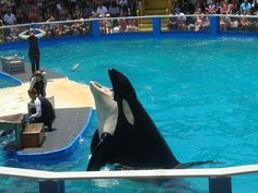 40 Years in a Barren Tank, Lolita the Orca Waits for Freedom