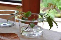 Viburnum plicatum in handmade glass vase