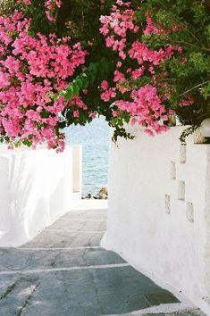 floral paths