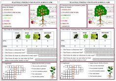 Plantele. Părțile unei plante și rolul lor 2