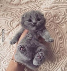He is a sweet cuddly baby... Aww